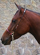horse bridles, horse halters, show halters, showing browbands